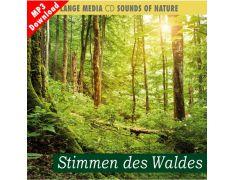 Naturgeräusche – Stimmen des Waldes (MP3)